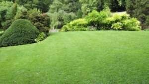 alpha zeta grass